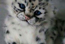 Leoparditos <3