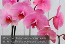 Garden Quotes / inspirational quotes, gardens, garden quotes, flowers, quotes, happy, inspiration
