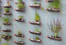 Kräuter / Blumen / Garten / Balkon