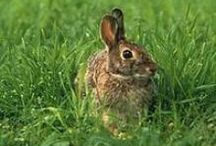 Rabbit Awareness Week / Rabbit Awareness Week aims to raise the profile of rabbits as pets and encourage owners to seek the right veterinary advice on rabbit nutrition and healthcare.