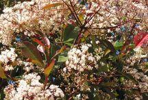 Trees in flower / Flower Power