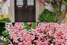 Virágos kerti inspirációk