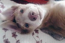 My pet Milo