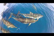 Vidéos Nager avec les Dauphins