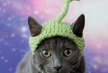 knit: pet stuff