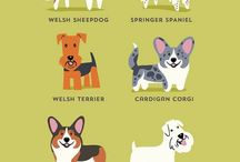 Dog Breeds / by Hot Dog Collars