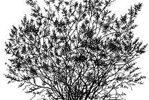 ağaç4