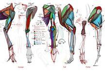Human Anatomy Reference