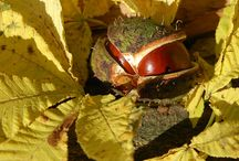 Bäume / Nicht nur Wildkräuter und Sträucher gehören zu den nutzbaren Pflanzen der kostbaren Natur. Viele wilde Bäume liefern uns Früchte, Blüten, Knospen, Samen, Blätter und Rinde. Wir müssen nur wissen, wie wir sie richtig anwenden können.  Finde heraus, wie du Linden, Kastanien, Ahorn, Birken und viele andere Bäume in der Ernährung und der Behandlung von Krankheiten verwenden kannst.