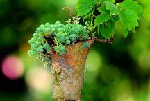 bonsaï kusamono