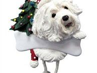 Havanese / Cute Havanese images and gift ideas.