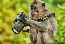 Φοτογραφο η Μαϊμού.