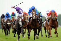 ➤ HORSE RACING