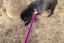 Spring 2015 - Pug / A pug enjoying spring