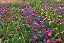 Fiori e Garden Design