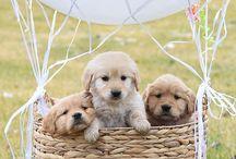 puppies :3 ♥