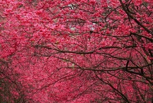 Beautiful / by Ineke Honingh