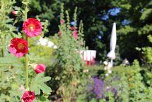 Unser Frühstücksgarten / Kleines Blumenparadies für Langschläfer: Unser Frühstücksgarten hinter dem Haus Fischerwiege. Unsere Hotelgäste können hier bis um 11 Uhr frühstücken, auf Wunsch sogar bis 13 Uhr!