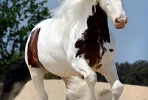 My favourite horses / Stunning horses / by Lisa Vance