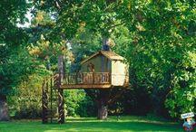 case sulľ albero