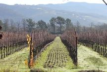 WINE ~ All Things Vineyard