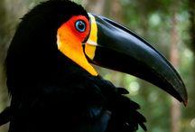 Birds/Pássaros Tropicais