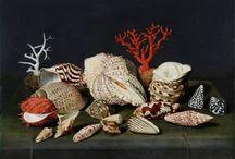 koraal en schelpen