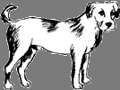 Dog / Years: 1910, 1922, 1934, 1946, 1958, 1970, 1982, 1994, 2006, 2018 / by Aligned Signs
