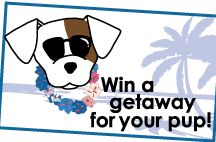 FlipFlop Dog Contests / Win a FREE vacation for your dog!  www.flipflopdogs.com