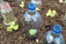 økologisk dyrking