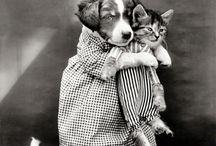 Cățeluși și pisicuțe ❤❤❤❤