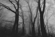 Eerie Woods B&W