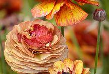 Ezerszínű Ősz-Autumns / Minden ami az őszről szól..