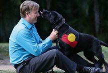 Training your Dog