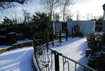 South Lodge garden