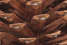 Colour   Brown   Copper   Rust