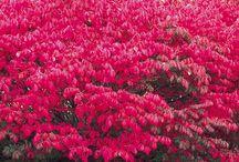 Stunning shrubs