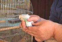 Parakeet Research