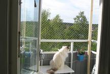 Kissat parvekkeelle