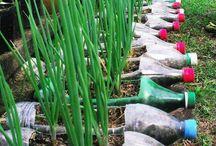 Ogrodnictwo w przedszkolu