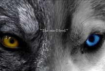 feed the good wolf
