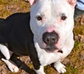 Rescue Ridge Dogs / Dogs that are available at Rescue Ridge, Spring Lake, NJ