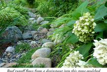 Rain Gardens & Bioswales