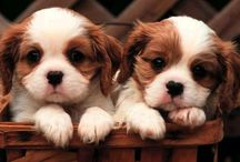 Like my little LOVE! / Who says that they can't speak?Just look at their eyes!