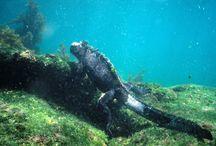 Marine life Galapagos