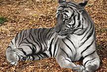Animals / Admire beautiful animals here