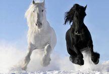 paarde en pony's