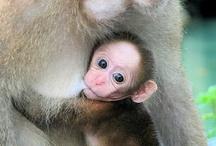 Allattamento (breastfeeding)