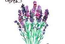 Watercolor mio