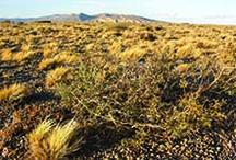 Paisajes de Argentina / Fotos de Argentina que reflejen sus hermosos paisajes.